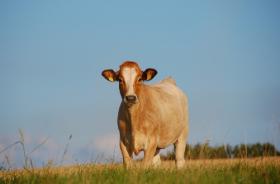 2021最新版的取名大全属牛,牛宝宝名字推荐