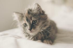 2021有创意的猫咪名字,有趣猫咪名字推荐