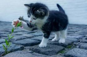 2021独一无二的猫咪名字,独特的猫咪名字有哪些