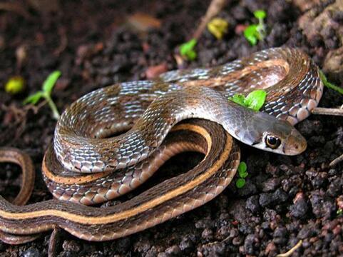 做梦梦到白色的蛇_周公解梦晚上做梦梦见蛇是什么意思,晚上做梦梦见蛇好不好 ...