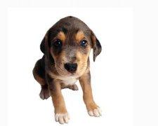 狗狗时髦好听的名字2017年版
