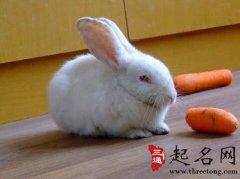 周公解梦梦见小兔子是什么意思
