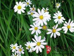 周公解梦梦见野花是什么意思