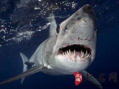 周公解梦梦见鲨鱼是什么意思
