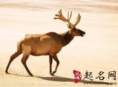 周公解梦梦见鹿是什么意思