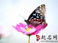 周公解梦梦见蝴蝶是什么意思