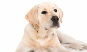 2020独一无二的狗狗名字,狗狗的名字这样取最好听