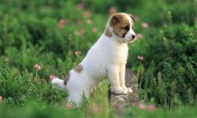 晚上狗叫有什么预兆,什么人不适合养狗