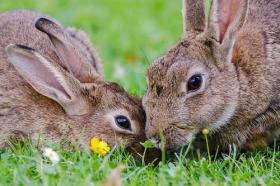 75年出生属兔人2020年事业财运,会发大财吗