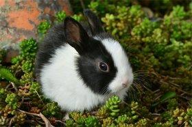 属兔人43岁孤寡难归是真的吗,有何依据