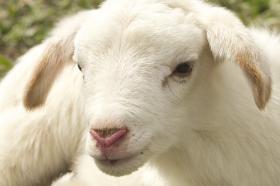 生肖羊和生肖猪能合作吗,互惠互利