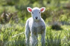 属羊人2019年10月运势详解,需留意健康