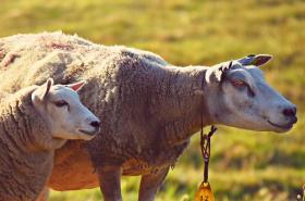 2020年属羊人害太岁事业财运如何,怎么化解