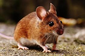 08年出生属鼠人命好吗,一生运势如何
