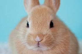 1987年出生属兔人桃花运如何,情感运势怎么样