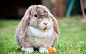 1975年属兔人2020年运势女性  46岁生肖兔2020年每月运程女
