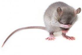 72年属鼠的会有多段婚姻吗,可能性比较小