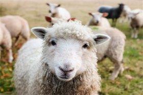 1967年属羊未来十年运势如何,衣食无忧