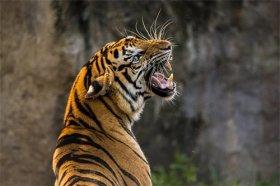 晚上出生的都是吃人虎吗,傍晚出生最不祥