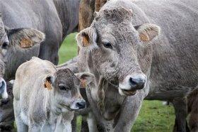 2021年属牛人的幸运数字是什么,属牛人在辛丑牛年的开运数字